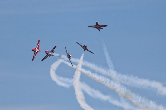 Flying Low Angle View Animal Themes Togetherness Blue Sky Mid-air Day Cloud Outdoors Airshow Red Migrating Vapor Trail No People Fighter Plane Zoology Military Airplane Cloud - Sky