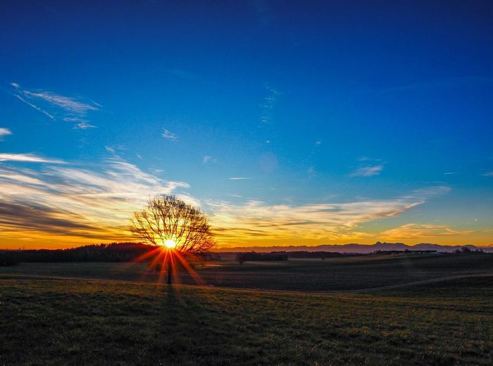 Tree Sonnenuntergang Sunset Sunset Field Sky Nature Rural Scene Outdoors No People Agriculture Blue Beauty In Nature Freshness
