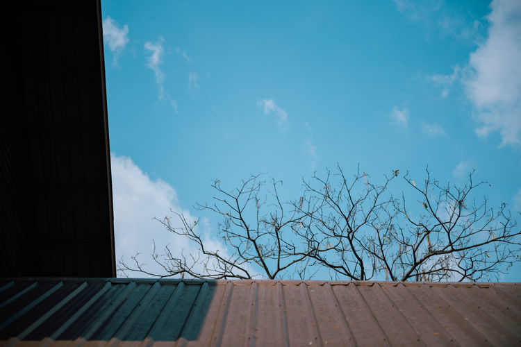 cloud - sky Cloud - Sky Sky Bare Tree Architecture Tree Built Structure Blue Nature Day No People Building Exterior Low Angle View Outdoors Building Sunlight Plant House Branch Window Wood - Material Blue Sky Nikonphotography Nikond750 EyeEm Best Shots Nature