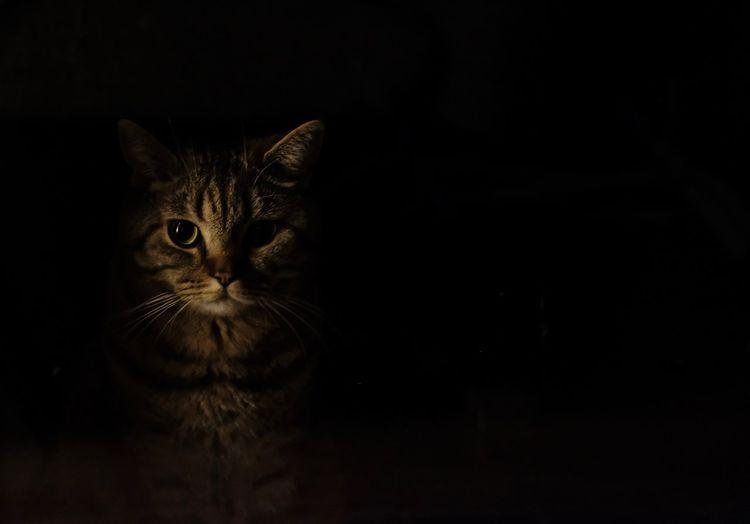 Black Background In The Dark Watching You Spycat Spy Spion Stille Behind The Window Shadow Dark Cat Portrait One Animal Black Background Looking At Camera