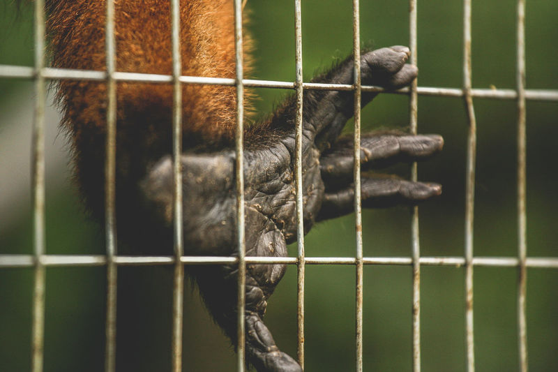 Cropped image of monkey in cage at zoo