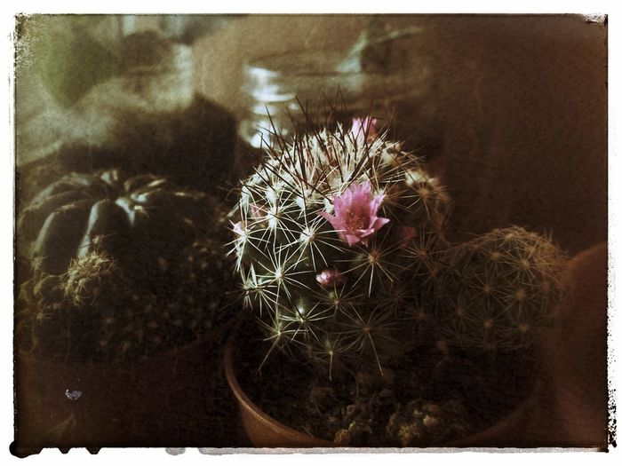 Cactus ✌️ Cactus Lowsaturation Retro Close-up Plant Spiked Spiky Thorn EyeEmNewHere