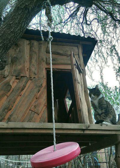 Tree House Torwächter Kater 🐱. Outdoor Pet Cat Sitting Over The Garden