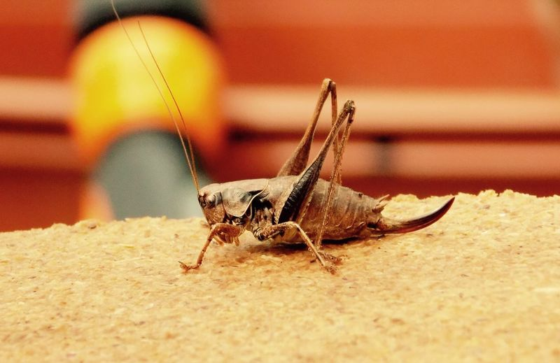 Close-up of grasshopper on field