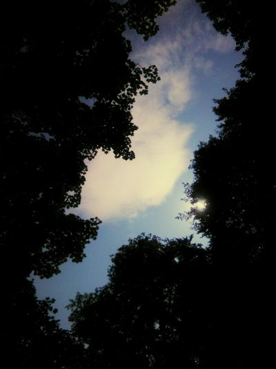 Sky And Clouds Treecanopy Nature Tranquility Sky Non-urban Scene WoodLand Outdoors Beauty In Nature Village Life Treetop Tree Low Angle View Silhouette Growth Scenics Tranquility Sky Tranquil Scene Nature Branch Beauty In Nature Cloud - Sky Non-urban Scene Outdoors