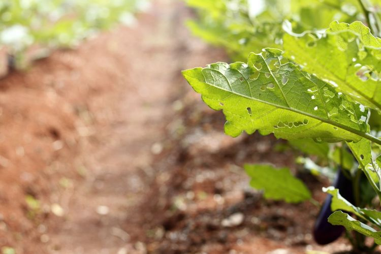Agriculture Agriculture Farm Agriculture Land Agriculture Photography Agriculture Way Beauty In Nature Close-up Day Focus On Foreground Fragility Freshness Green Color Growth Insect Leaf Nature No People Outdoors Plant Tree