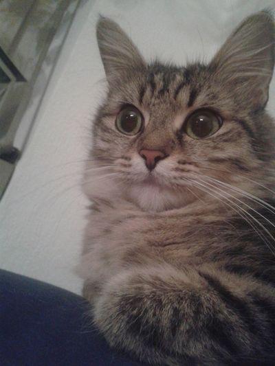 Playing With The Animals Cute Pets Cat Animals Katzenliebe Babycat ❤ Babycat🐱 Katzen Katzenfoto Katzen<3 Katzen 💜 Meine Katzen