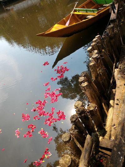 Petal drops Petal Flower Lake Boat Wood Nature