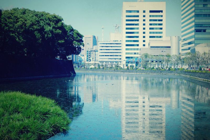 Moat of the Imperial Palace Building Exterior Tree Architecture Water Built Structure City Reflection Outdoors Growth Sky Day No People Modern Skyscraper