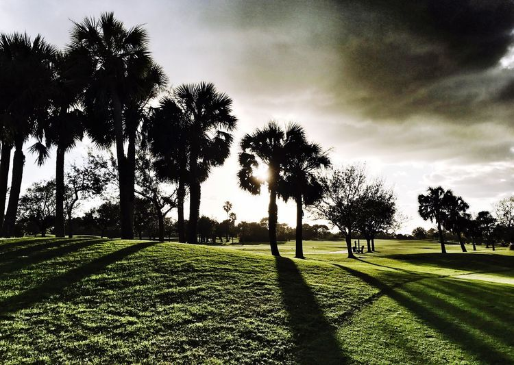 Tree Grass Growth Nature Green Color No People Sky Beauty In Nature Scenics Landscape Outdoors Palm Tree Tranquil Scene Field Tranquility Cloud - Sky Day Green - Golf Course Golf Course so lucky to live where I can golf all year TheWeekOnEyeEM Betterlandscapes The Great Outdoors - 2017 EyeEm Awards