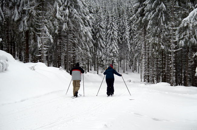 Skilanglauf im Thüringer Wald Bäume Forest Landscape Landschaft Loipe Natur Nature Schi Schnee Ski Snow The Following Thüringer Wald Tree Wald Winter