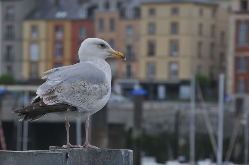 France Harbor Metal Post Animal Themes Bird City Day Focus On Foreground Full Frame No People One Animal Seagull