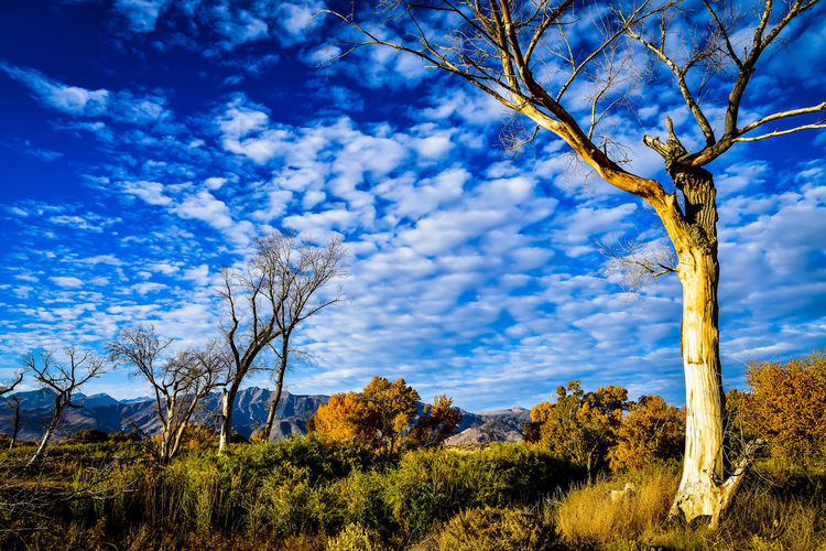 Plants on landscape against blue sky
