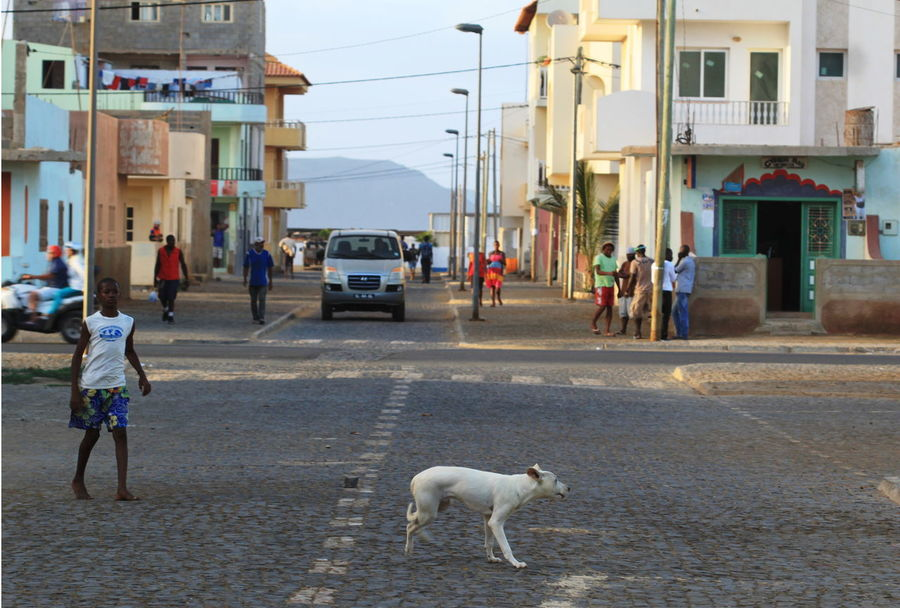 Building Exterior Capo Verde Cars City Day Dog Large Group Of People Movement One Animal Outdoors Quad Real People Road Sal Island Santa Maria Street Summer 2015