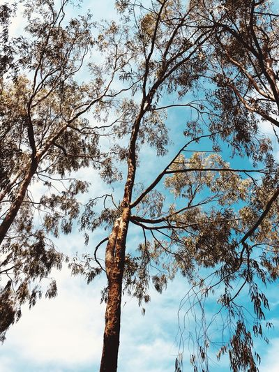 Tree Low Angle View Branch Nature Tree Trunk Day Growth Sky Outdoors Beauty In Nature No People Tranquility Scenics Foliage Foliage Comes Alive Foliage Tree Foliage At It's Best Foliage Texture Foliage Leave