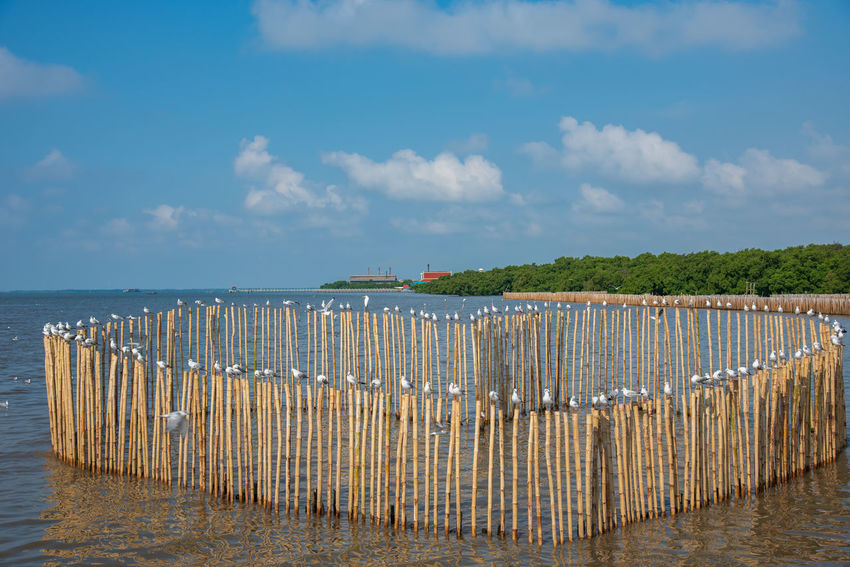 seagulls in action is flying on the sky with cloud,ITake a break on a heart-shaped stump. Sky Cloud - Sky Water Sea Beauty In Nature Nature Beach Scenics - Nature Tranquility Tranquil Scene Land No People Day Wood - Material Horizon Over Water Horizon Architecture Wooden Post Idyllic Outdoors Post