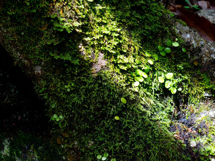 G15 Green Nature Tranquility After Rain Canon Day Light And Shadow Moss No People