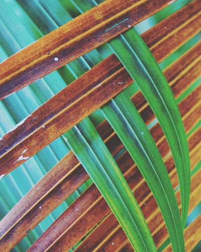 Green Color No People Leaf Plant Part Full Frame Close-up Pattern Day Backgrounds Growth Nature Plant Wood - Material High Angle View Freshness Outdoors Beauty In Nature Food And Drink Palm Tree Palm Leaf