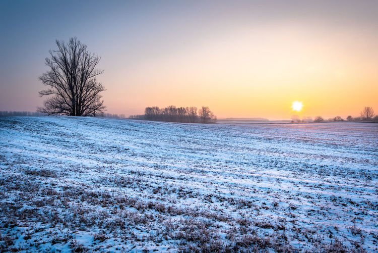 Leafless Tree White Color White Cold Dawn Sun Sunrise Morning Tree Copy Space Meadow Field Snow Frozen No People Nature Tranquil Scene Tranquility Beauty In Nature Scenics - Nature Winter Cold Temperature Sky Environment Landscape