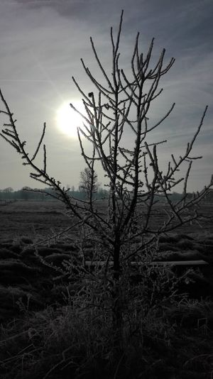 Bare Tree Landscape Nature Tree Single Tree Day Sky Tree Trunk Branch No People Dramatic Sky Outdoors Fog Beauty In Nature Sunlight Nofilterneeded Nofilternoedit Growth Tree Plant Cold Temperature