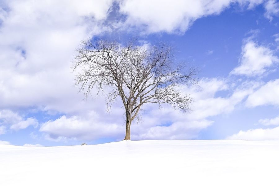 In the clouds Ice Frozen Snow Snow Tree And Sky Winter Solitude Dream Tree In The Clouds Winter Tree Tree Sky Tranquility Beauty In Nature Lone Landscape Tranquil Scene Cloud - Sky Nature Bare Tree Outdoors Scenics