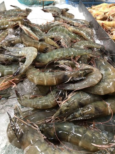One morning when I visited the Ang Mo Kio 628 wet market. Prawns but I'm not sure what species they are. Close-up Crustacean Fish Market Fishing Industry Ice Market Stall Prawns Seafood Shrimp - Seafood Wet Market