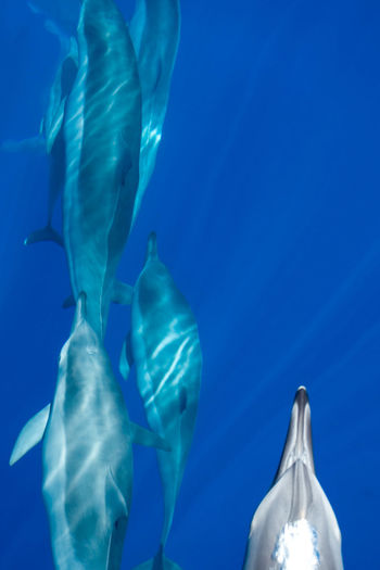 Animal Photography Blue Sea And Clear Water Bluewater Bottlenose Dolphins Dolphins Nature Photography Swim Breeze Water_collection