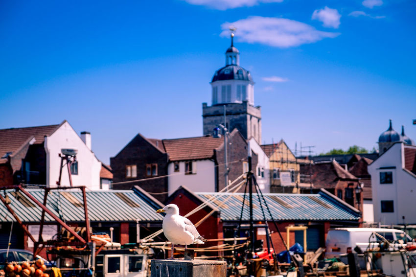 Old Portsmouth Cathedral Portsmouth Portsmouth Harbour Architecture Blue Building Exterior Built Structure Clear Sky Day Fish Monger Fishmonger No People Old Portsmouth Outdoors Seagull Sky Town