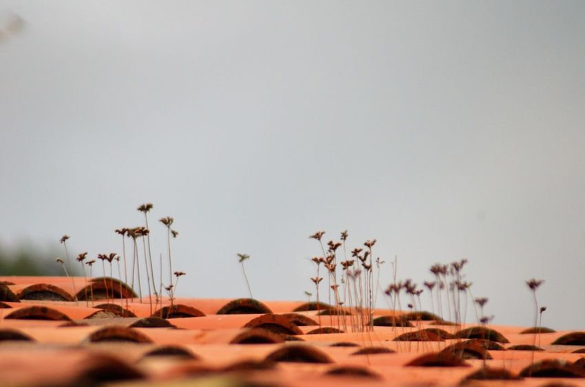 Roof Nature_collection EyeEm Gallery From My Point Of View Eye4photography  Sky Nature Sand Land Copy Space Large Group Of Animals Group Of Animals Environment Scenics - Nature