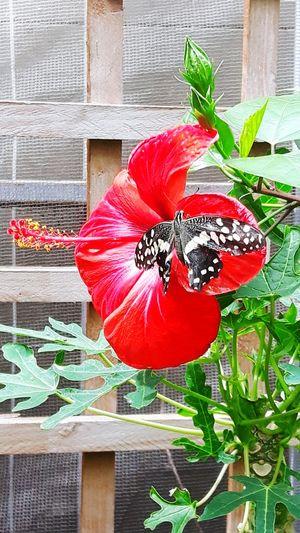 Butterflyfarm Butterfly Cornwall Exotic