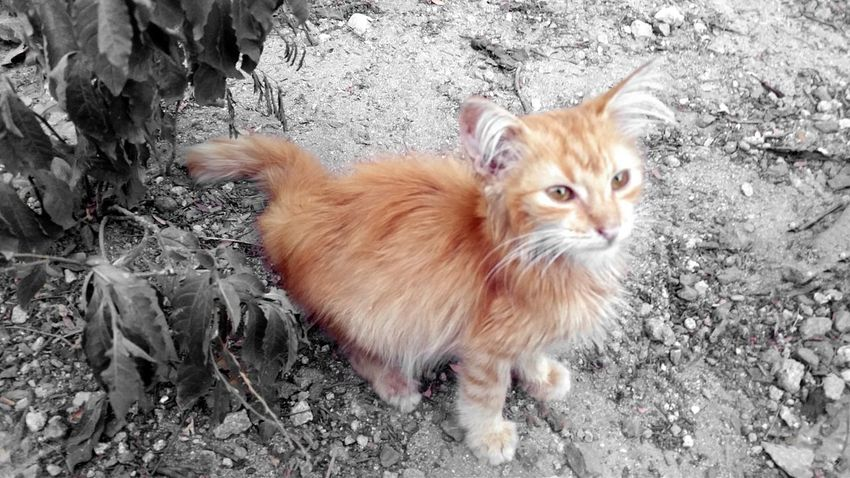 Domestic Animals Animal Themes One Animal Close-up Domestic Cat Cat Lovers Kitten St.Croix, US Virgin Islands