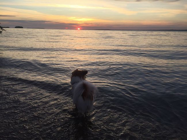 The Week On EyeEm EyeEmNewHere Chewie Watching The Sunset Chewie Sunset Nature Beauty In Nature Dog Water One Animal Beach Tranquility Outdoors Horizon Over Water No People Cloud - Sky