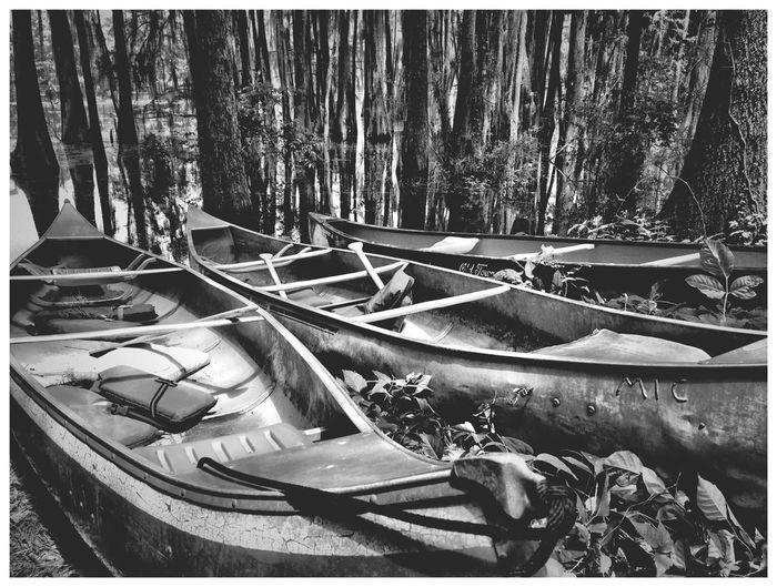 B&W - Caddo Lake Canoes Canoes Nature Black & White
