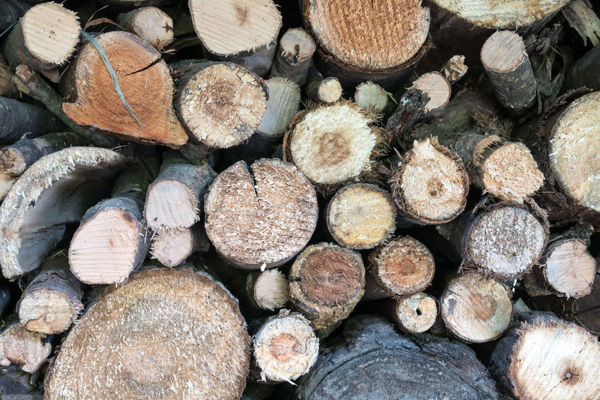 Trees that have been cut down Branches Cutting HORIZONTAL COMPOSITIII Industry Logging Trees Wood Cut Down Environment Environmental Proteccccc Firewood Forest Industry Engineering Heat Heating Jungle Protection Round Wood Trunk Wood Processing