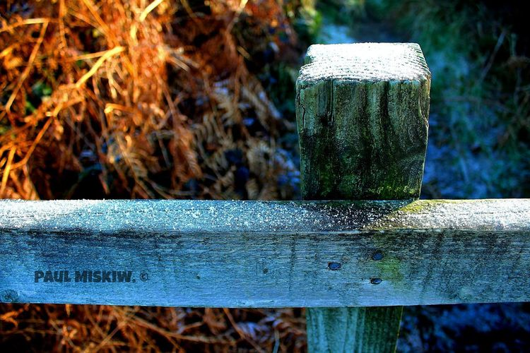 Icy Fence