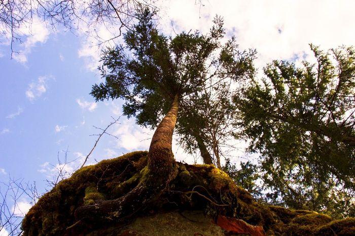 Forest Spruce The Gulf Of Finland First Eyeem Photo Nikon Природа Лес первое фото