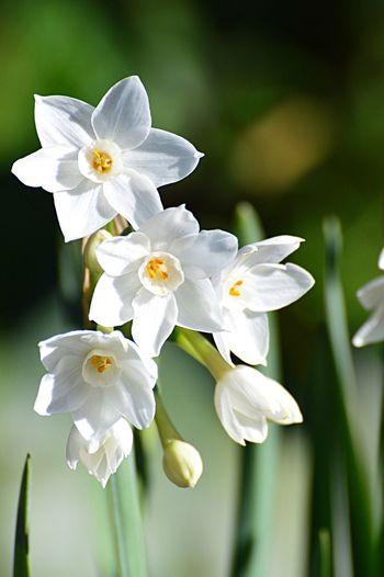 White Flowers Wintertime Nature Flora And Fauna Fauna Garden & Nature Garden