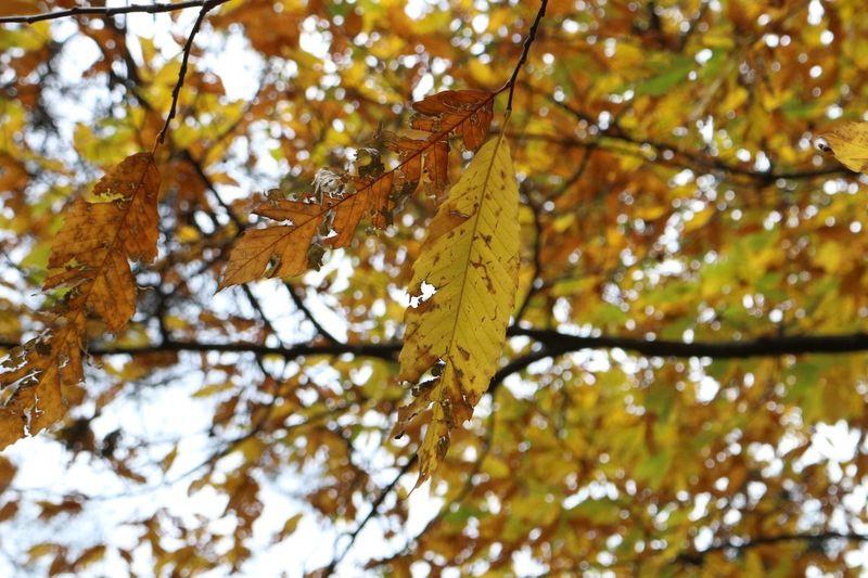 Troodos Autumn