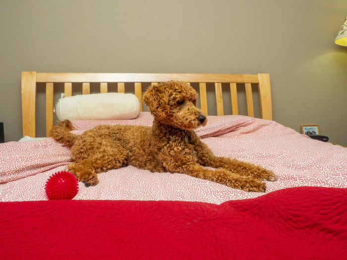 Stuffed toy on bed at home
