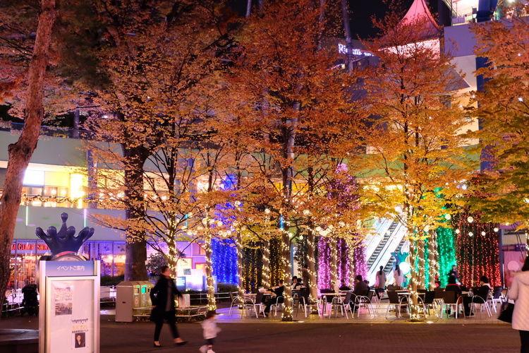 Multi Colored Tree Lifestyles Outdoors Day Night Life Autumn Park Life Memories ❤ Celebration Colour Of Life Fujifilm Night