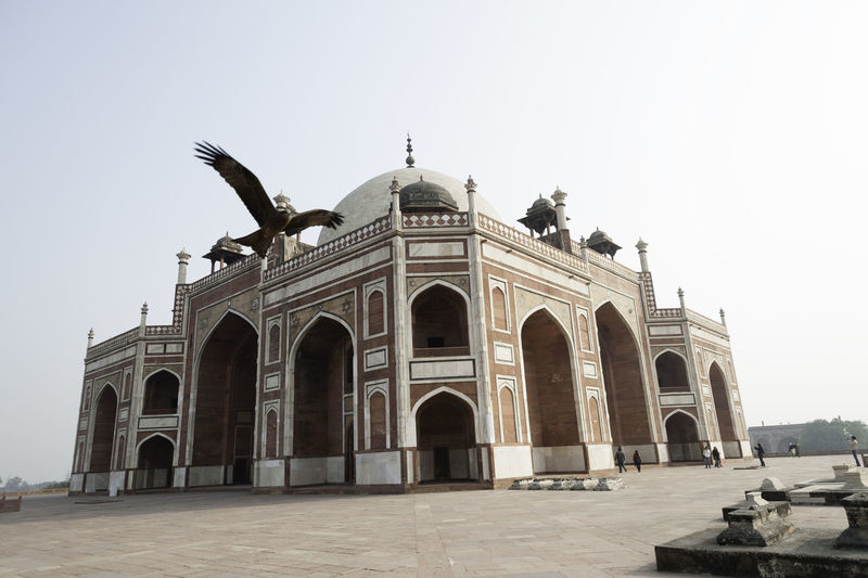 A hawk flying next to the Mughal era monument, Humayun Tomb, located in Delhi, with some tourists visible nearby. The tomb was built as the final resting place of the Mughal emperor, who died in a fall from a staircase. Humayun Tomb is a magnificent red sandstone structure, located in the heart of Delhi. It is the tomb of the second great Mughal emperor, Humayun and was commissioned by his wife, Hamida Banu Begum in 1562 AD. It is a garden tomb, with the central structure of the tomb located in the middle of large gardens. The tomb is located very close to the Purana Qila, the fort used by the Mughals as their citadel. The tomb has gone through large scale renovation in collaboration with the Aga Khan trust and was declared a UNESCO World Heritage monument. The tomb, in addition to housing the tomb of the emperor, also houses the graves of his wife Hamida Begum and many others as well (including many later not so famous emperors of the Mughal dynasty) and the famous Dara Shikoh. Hawk Heritage Structure Humayun Tomb Medieval Monument Mughal Structure Animal Themes Arch Architecture Bird Built Structure Clear Sky History Low Angle View Outdoors Travel Destinations