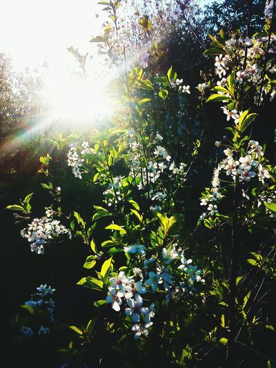 Nature Growth Sunlight Tree Plant Freshness Outdoors Leaf Day Beauty In Nature Branch No People Flower Close-up Sky First Eyeem Photo