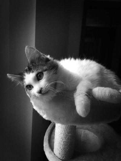 Cat Blackandwhite Gatto Cat♡ Cat Lovers