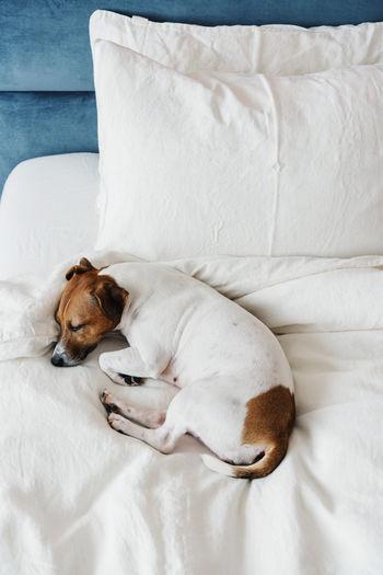 High angle view of a dog sleeping on sofa