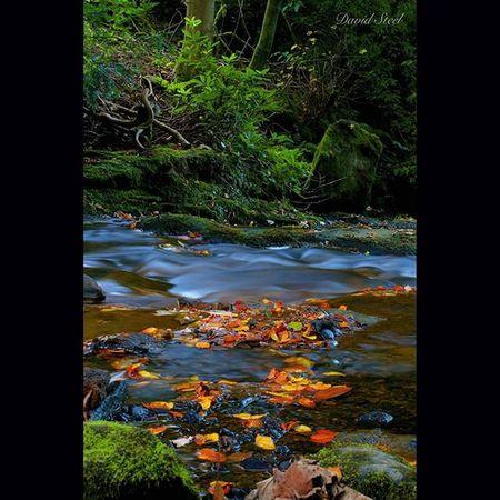 "Autumn is here. Westquarter Glen. ISO 100, f18, 8""sec. Ig_shutterbugs Naturelover_gr Nature_sultans Loves_Scotland BonnieScotland Igbest_shots Ig_landscapes Bnw_captures Bnwscotland Insta_Scotland Loves_Scotland Special_shots Ig_Scotland Ic_water Ig_bliss Princely_shotz Britains_talent Nature_shooters Nature_best_shots"