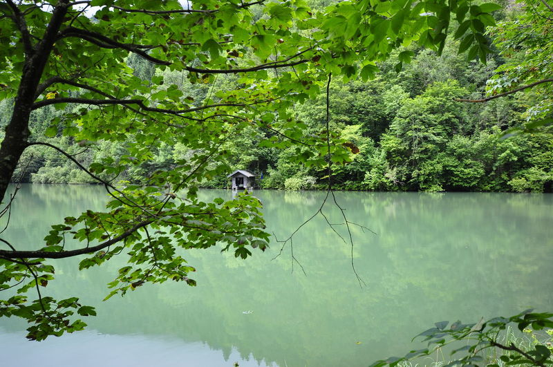 View of a lake in a forest