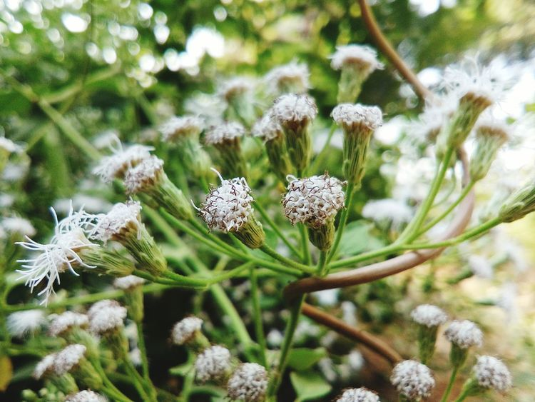 Nature Beauty In Nature Plant Close-up Focus On Foreground No People Flower Outdoors Growth Snow Day Green Color Flower HeadGrowth 🌲🚶🌲Forest Hike