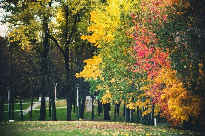 Autumn Leaves Autumn Colors Autumn осень Taking Photos Popular Photos Colorful Park Trees TreePorn Nature_collection Nature Naturelovers Природа Helios 44-2 Leaves