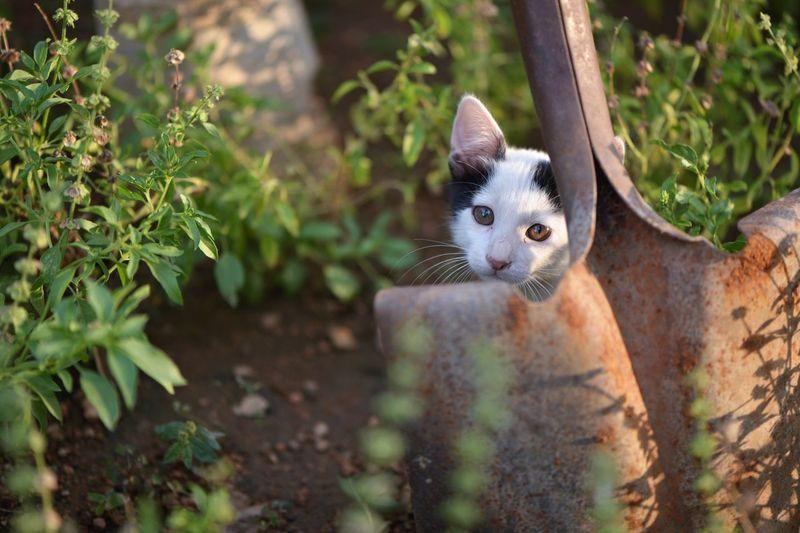 Close-up portrait of cat amidst plants