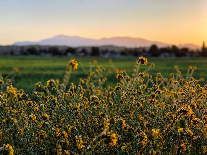In the Distance Sunrise_sunsets_aroundworld Sunrise_Collection Sunrise Nature_collection Nature Morning Good Morning Plant Field Land Sky Beauty In Nature Growth Landscape Focus On Foreground Flower